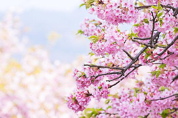 もうすぐお彼岸。ご存知でしたか、『春分の日』